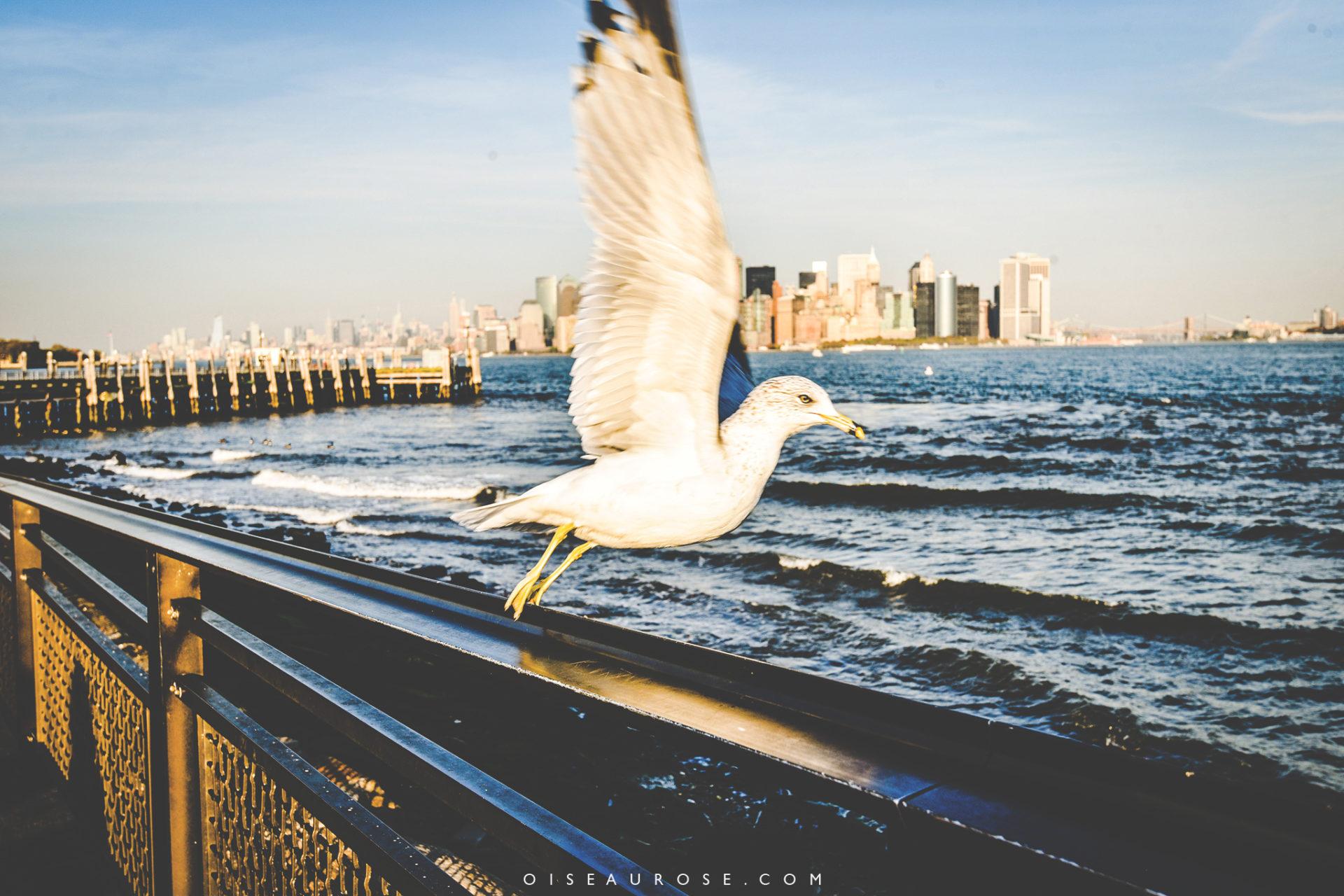 1-statue-liberte-new-york-ambiance