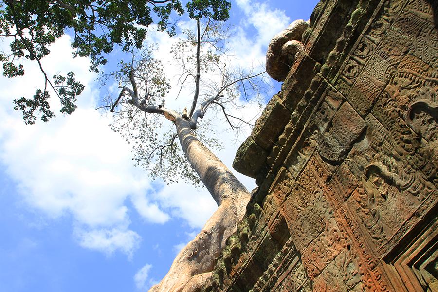 Angkor39