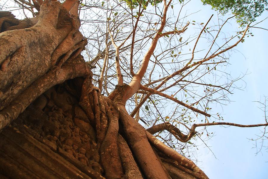 Angkor46