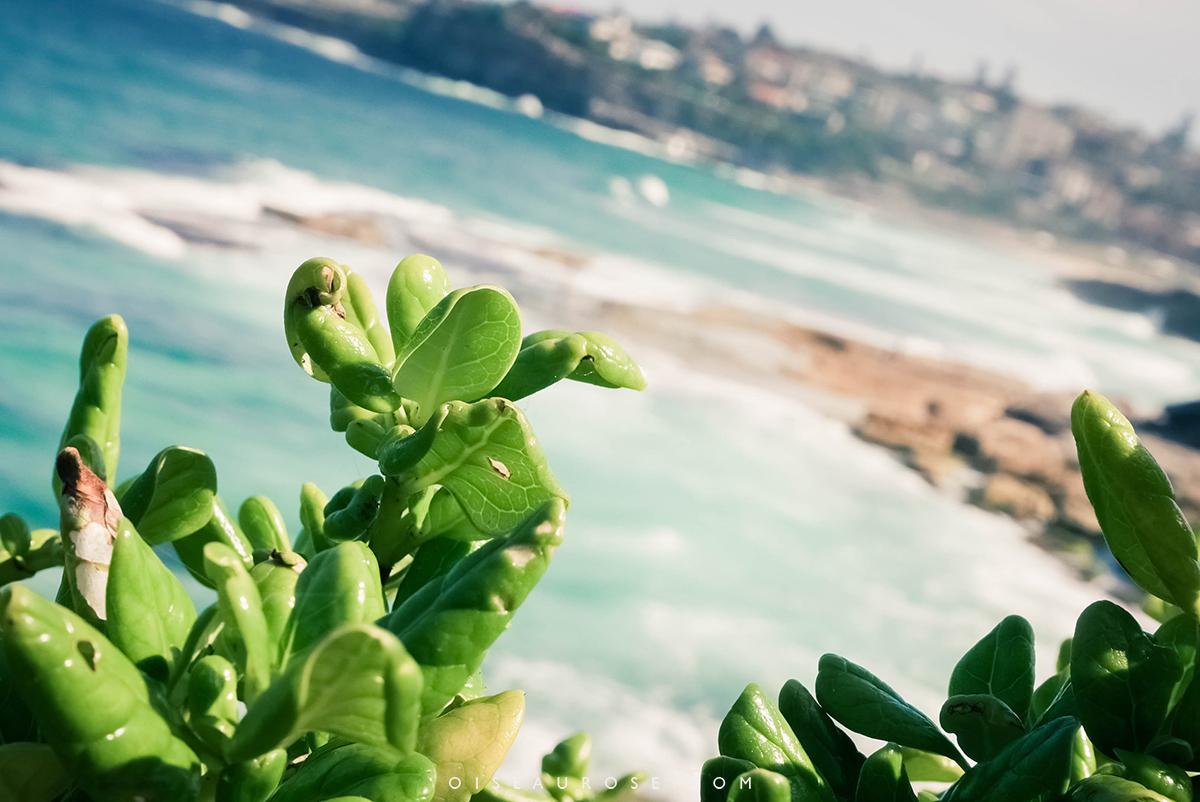 Australie-Bondi-Beach-2