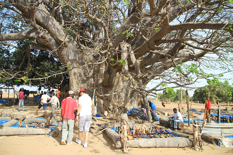 Baobab-2000ans-senegal