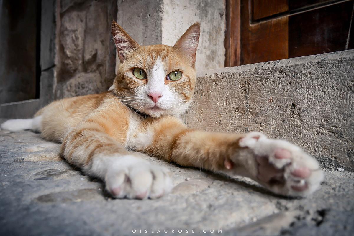 Dubrovnik-chat-rue