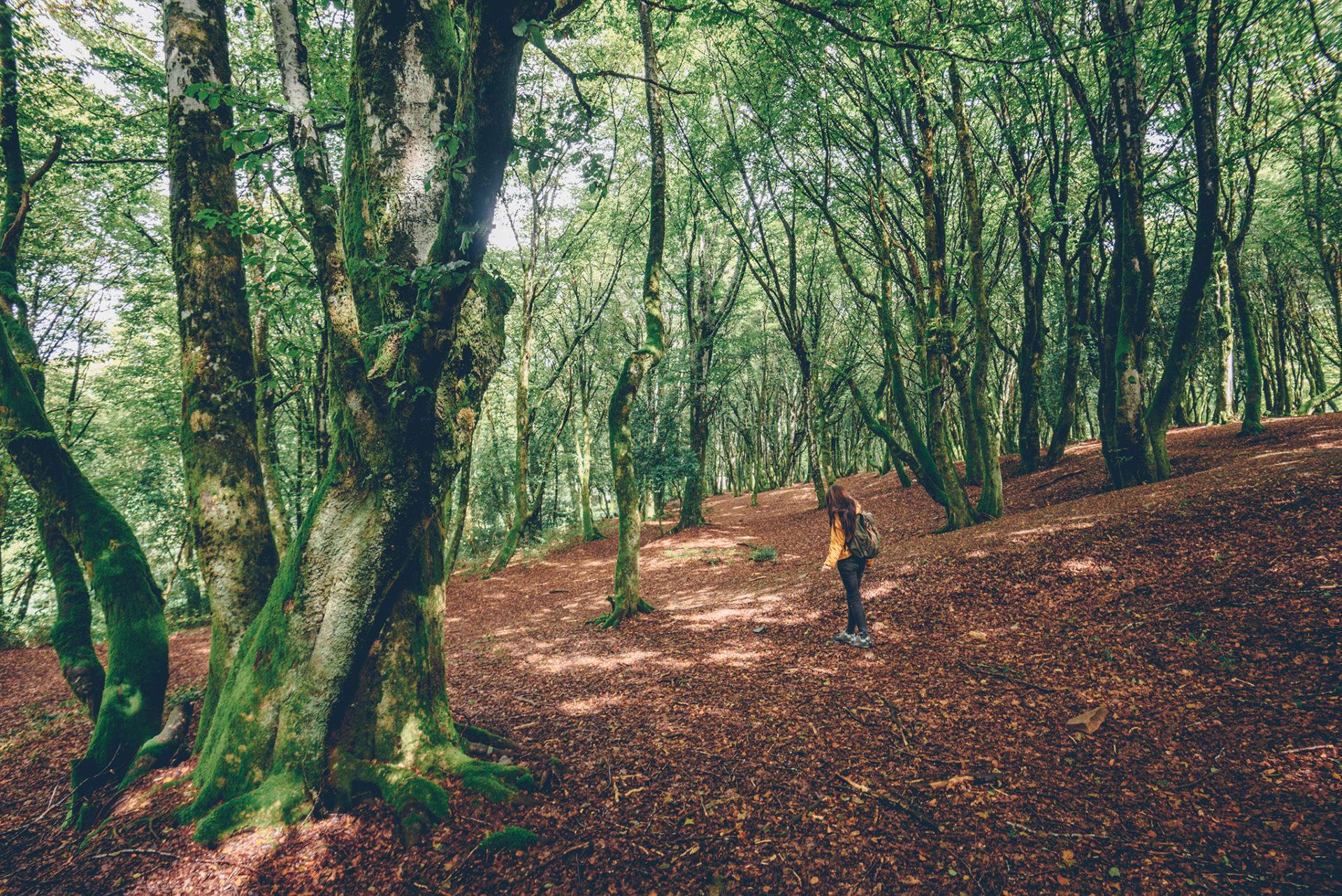 week-end dans la Nièvre mont beuvray forêt