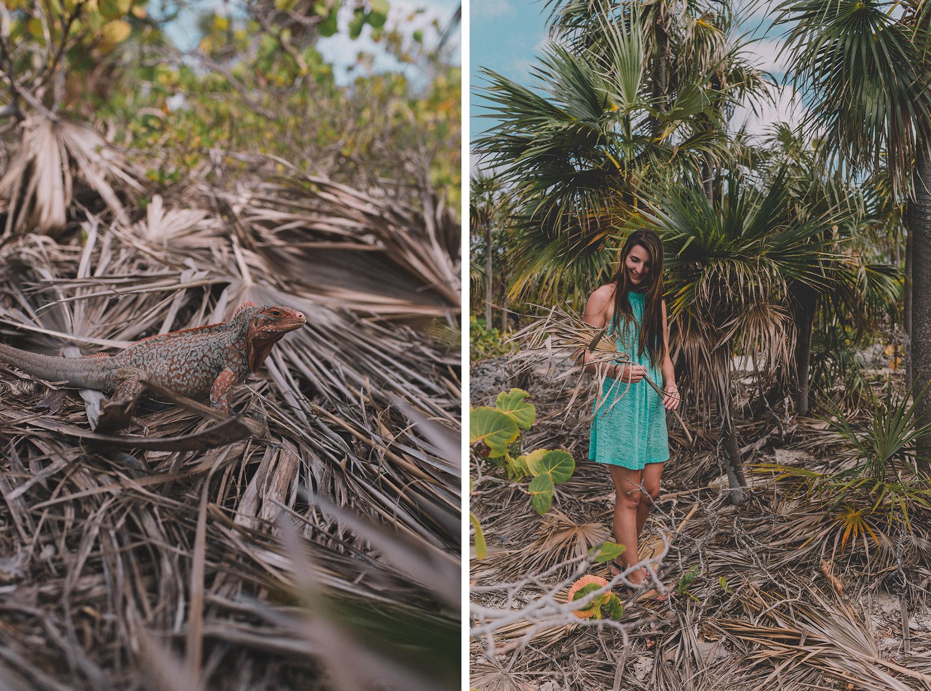 île déserte Sandy Cay, Bahamas