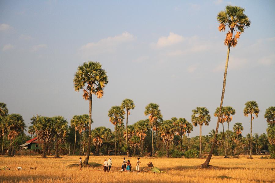 Campagne près de Kampot