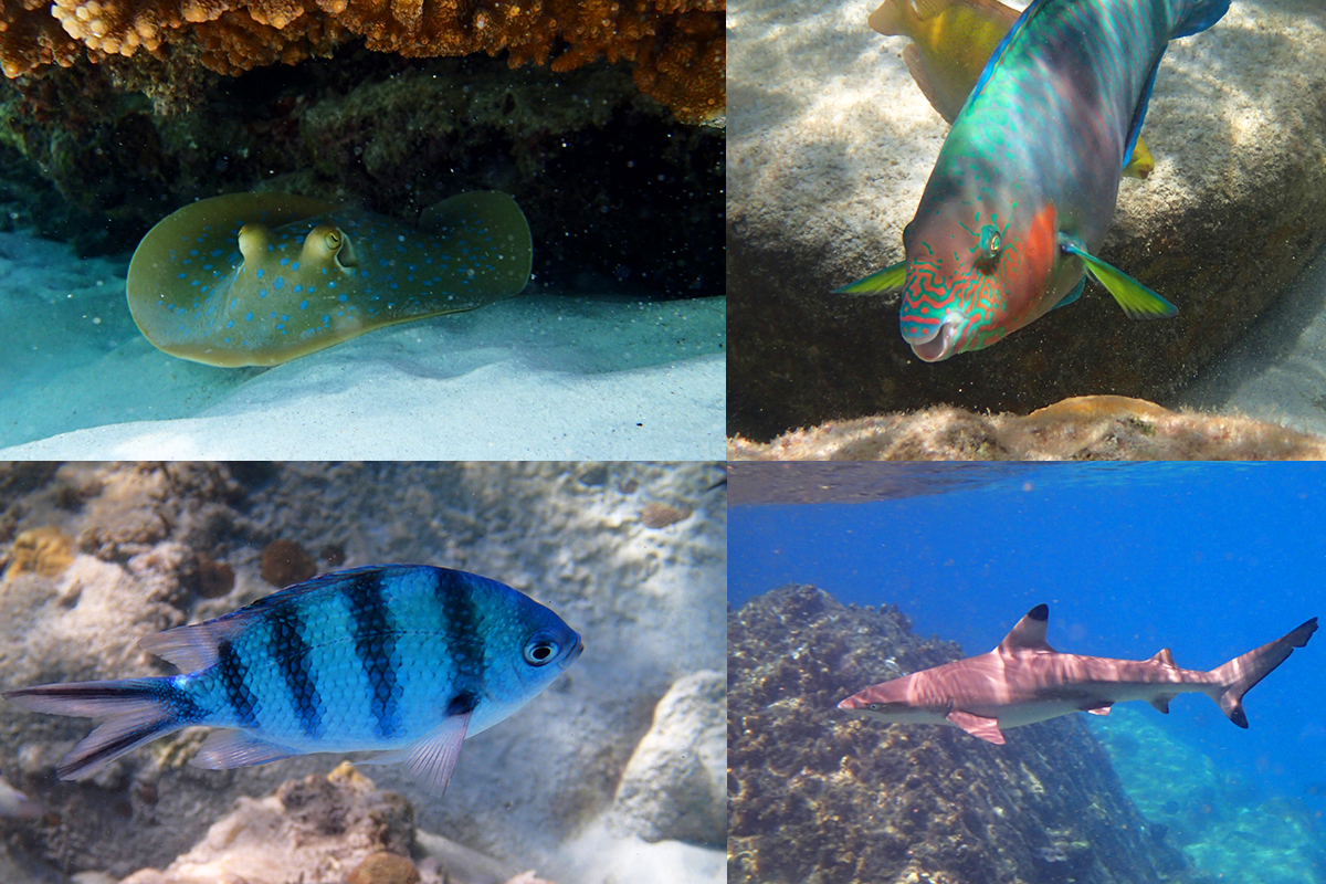 Voici un petit aperçu de ce que vous verrez en faisant du snorkeling à Perhentian !