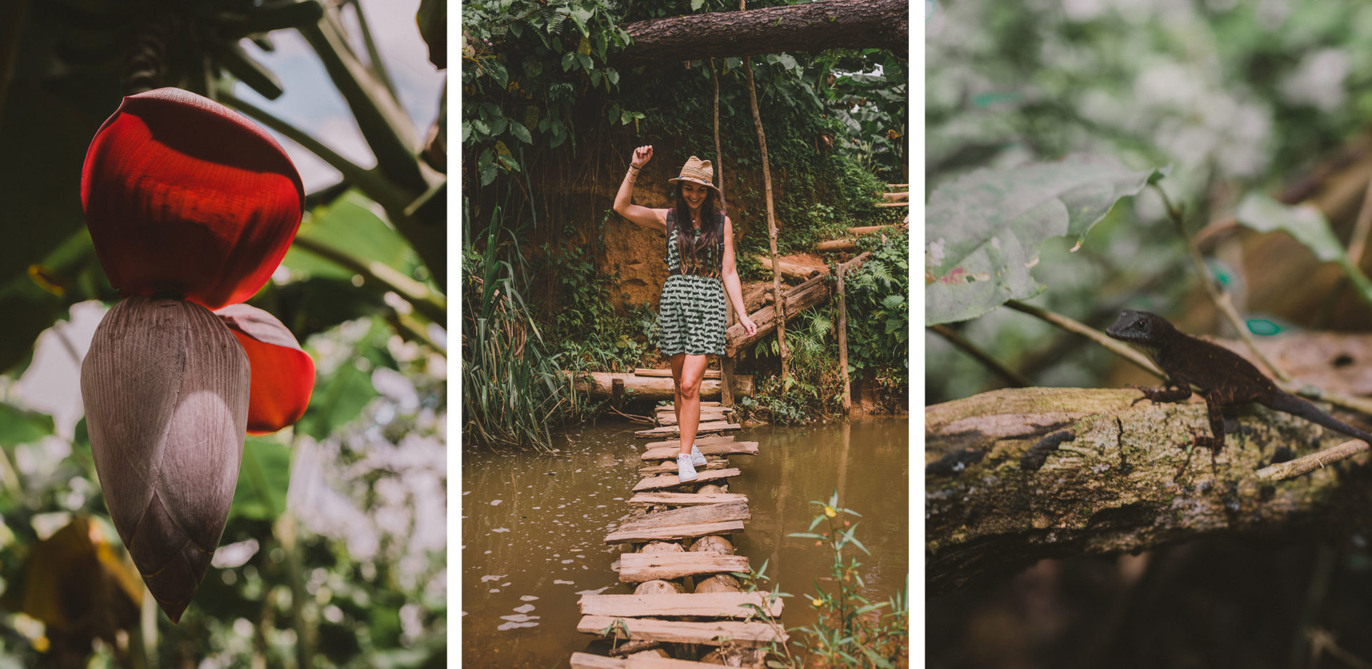 Découvrir la nature luxuriante de Cuba