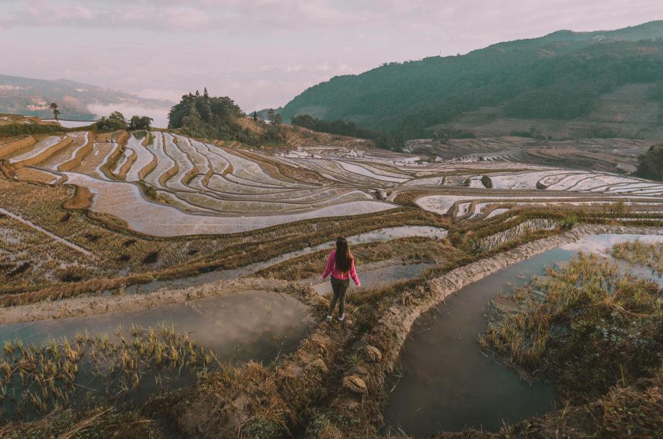 Découverte du sud Yunnan, avec les fameuses rizières en terrasse de Yuanyang et la vielle ville de Jianshui