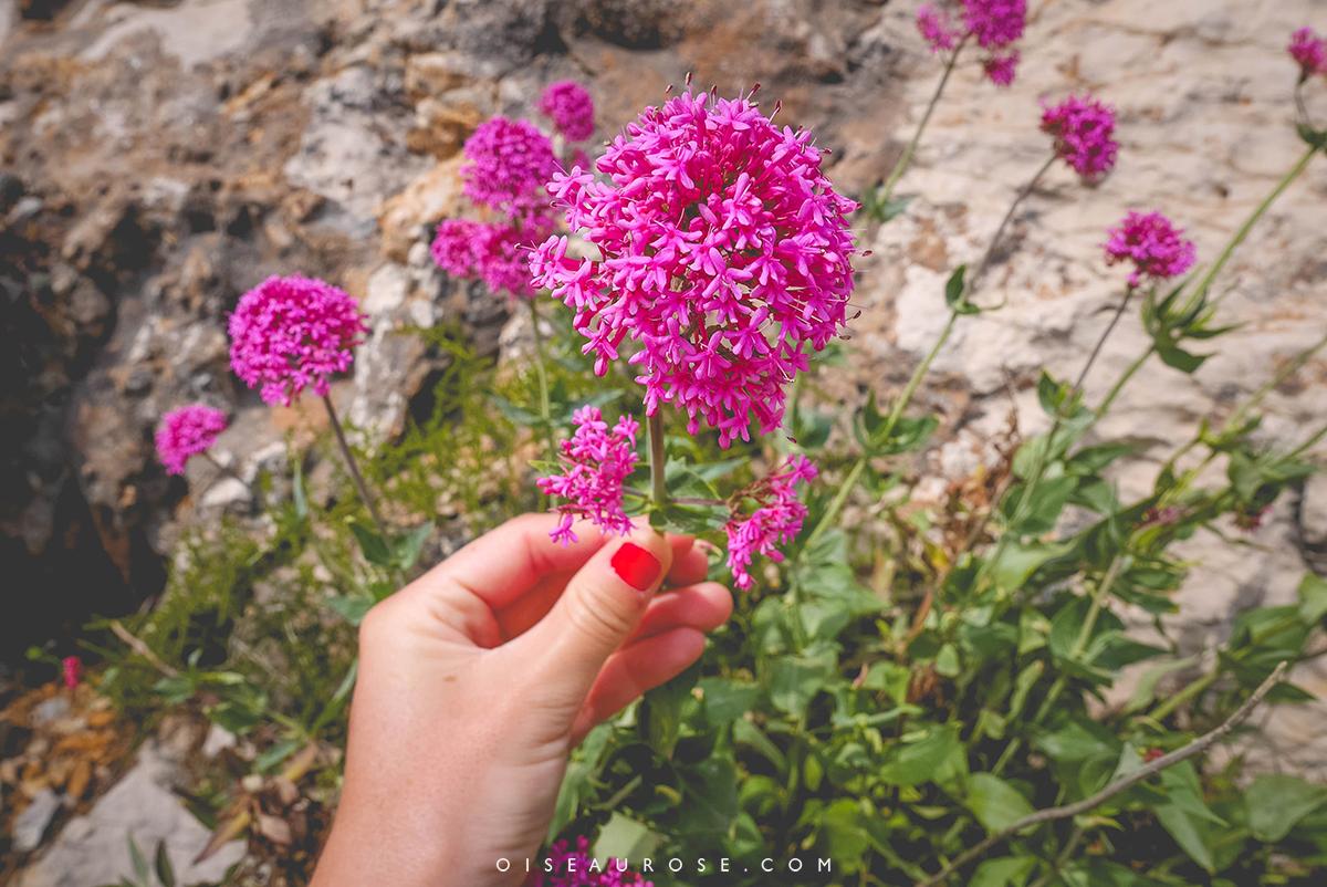 calanques-marseille-fleurs