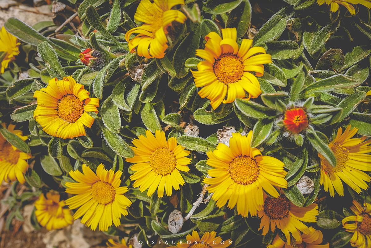 calanques-végétation