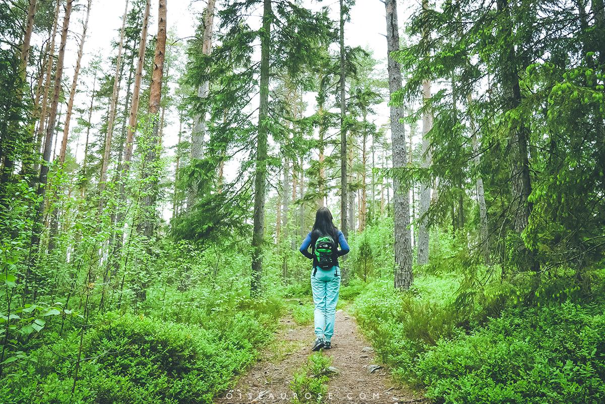 finlande-foret-randonnée