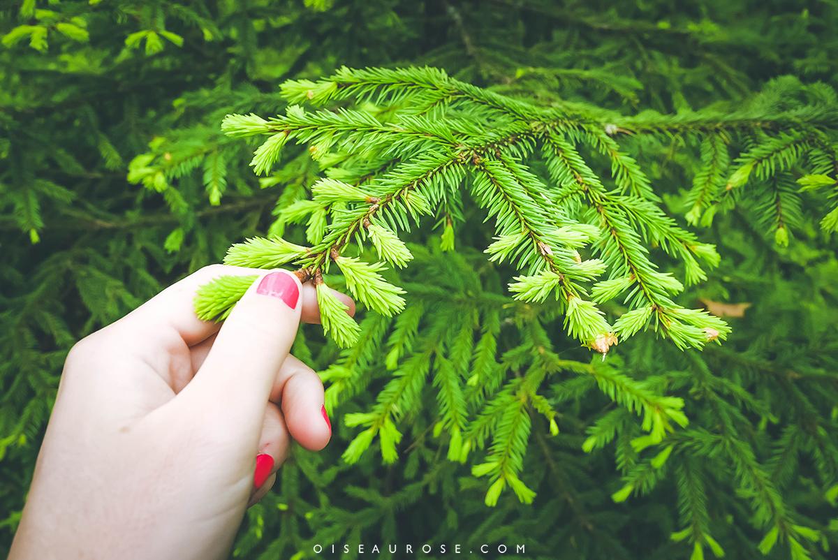finlande-végétation