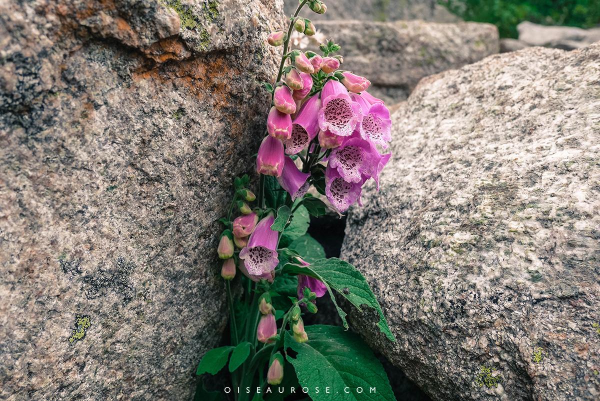 fleurs-lac-corse