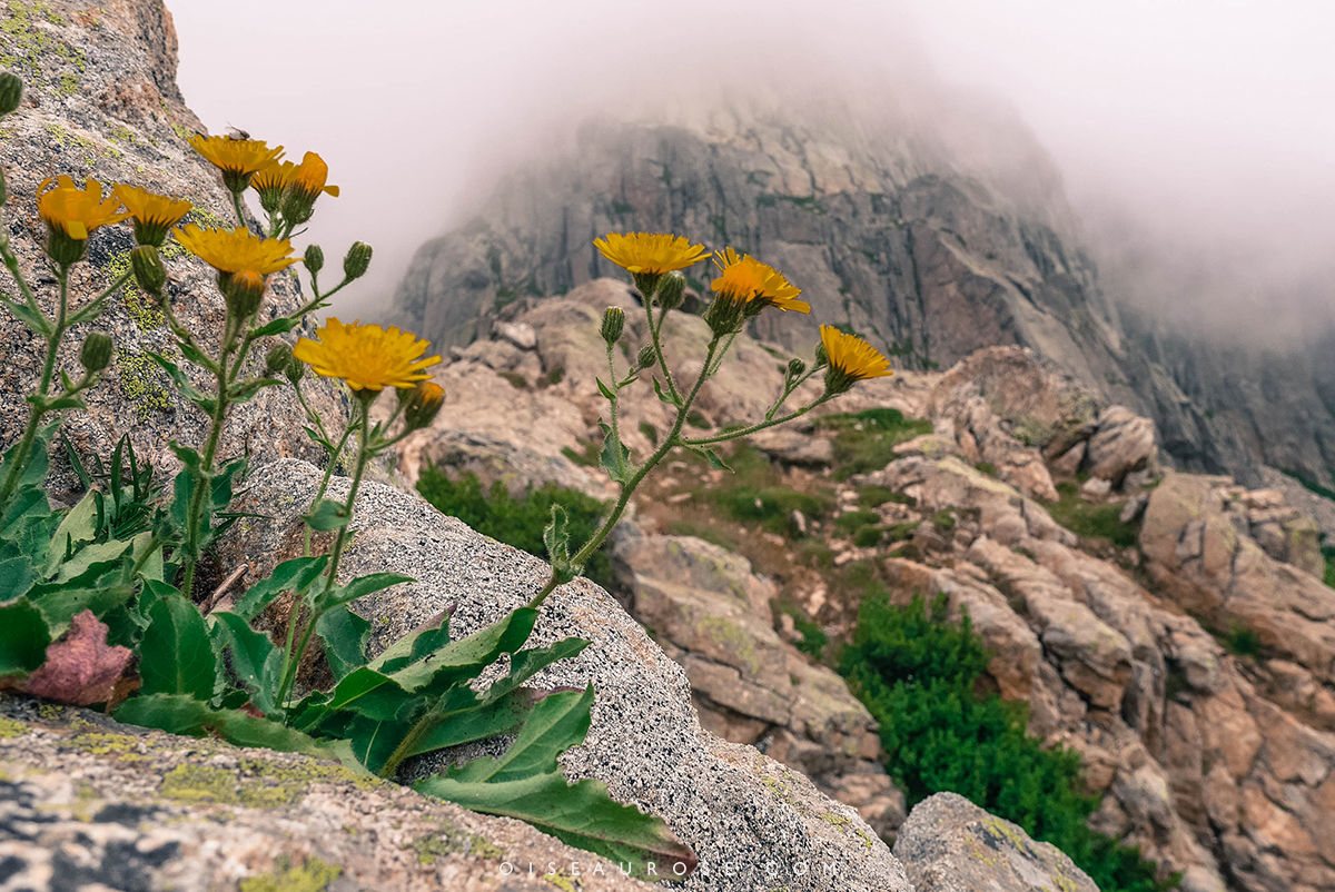fleurs-lac-melo-capitello