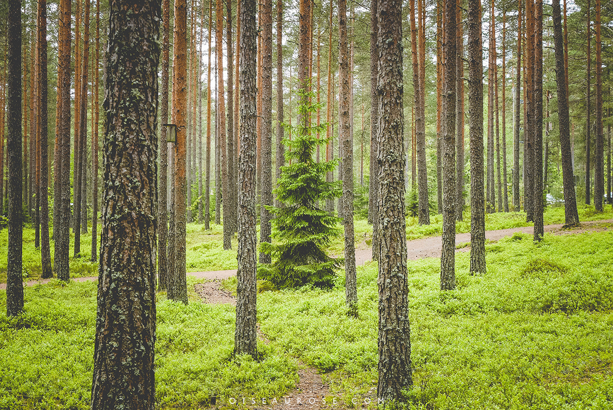 foret-teijo-parc-national