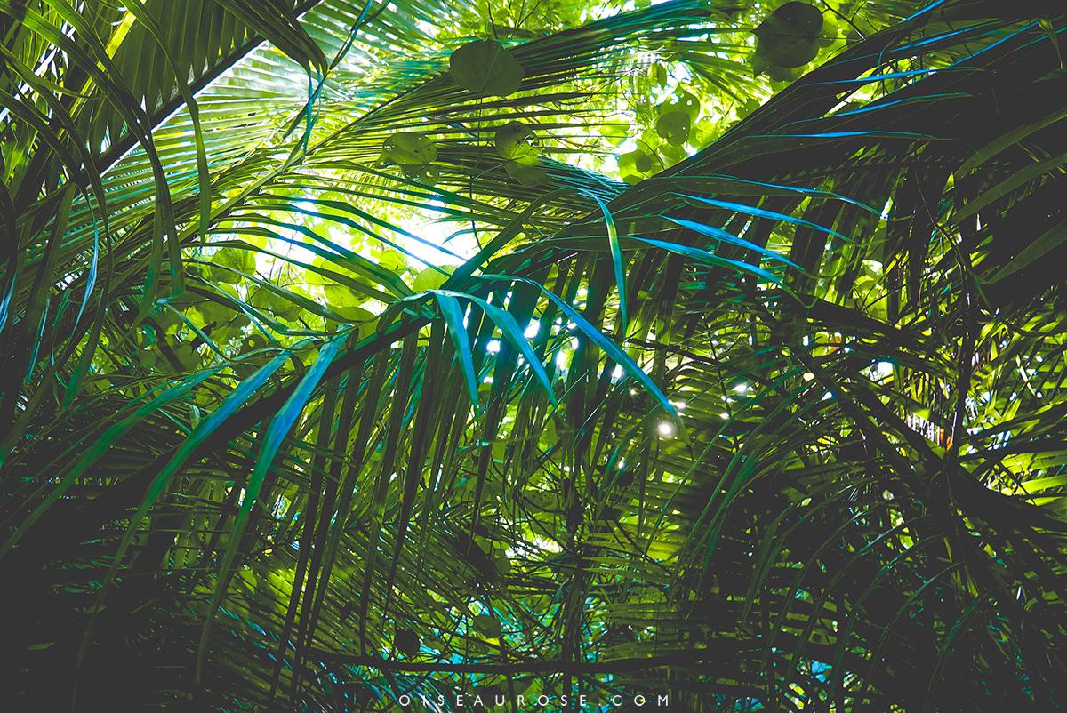 ile-des-pins-vegetation