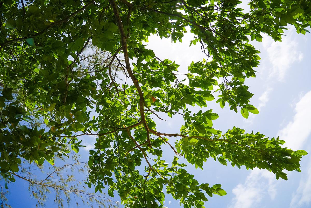ile-maurice-vegetation