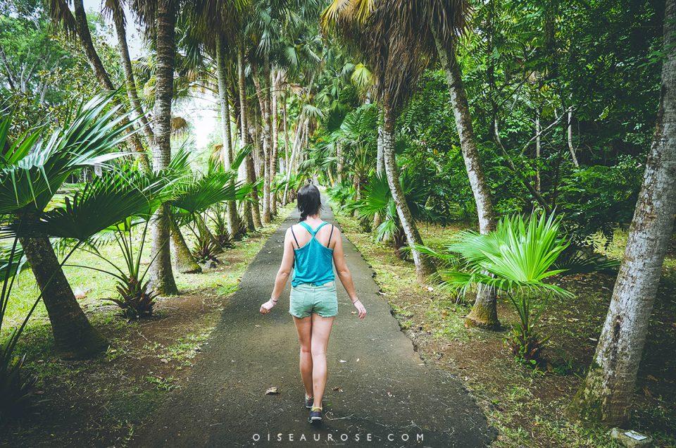 Coup de coeur pour le «Jardin de Pamplemousses» à l'île Maurice