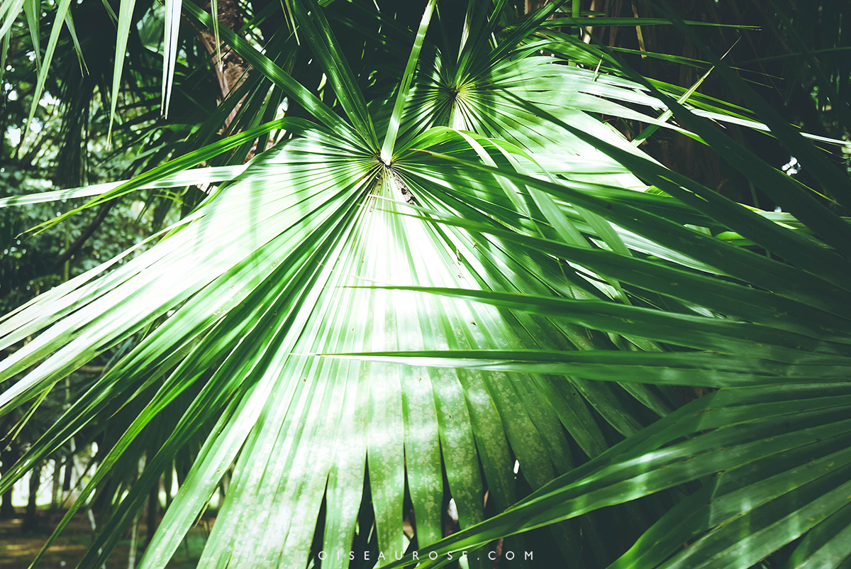 jardin-pamplemousse-maurice-plantes