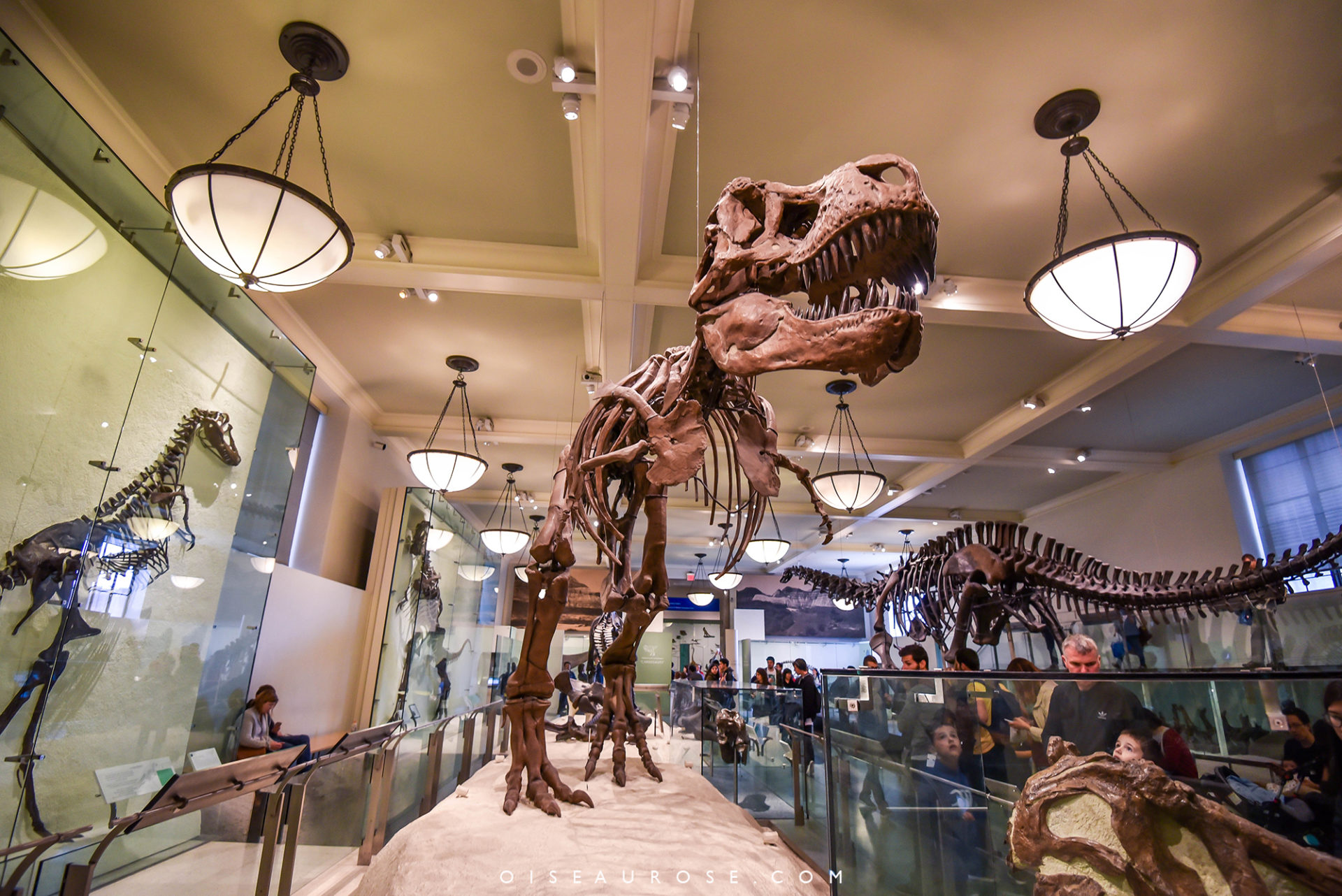 musee-histoire-naturelle-new-york