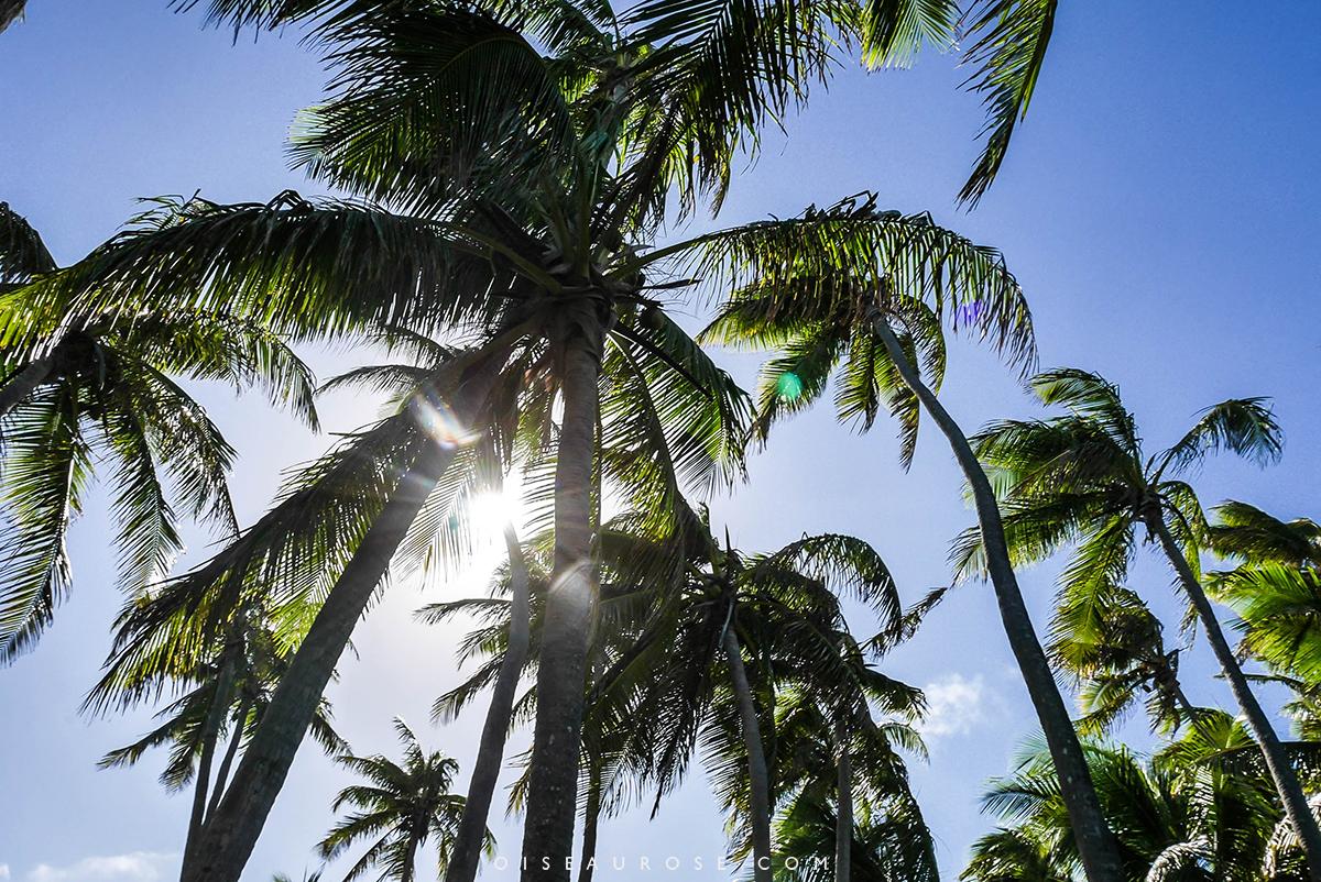 ouvéa-palmiers