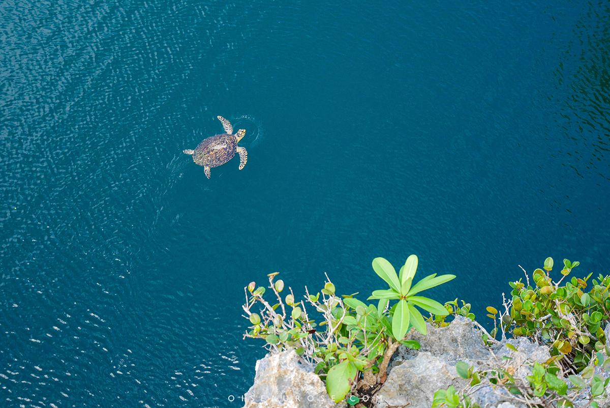 ouvéa-tortue