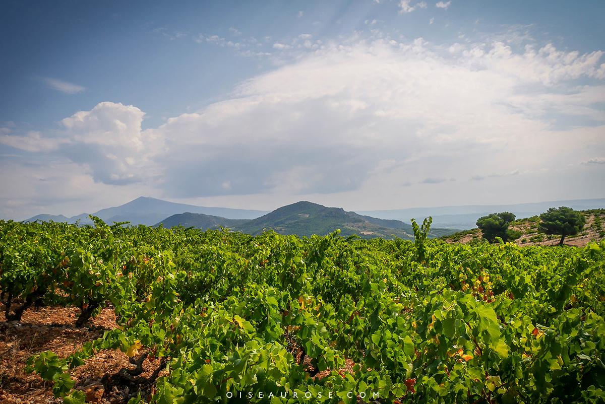 paysages-sublimes-provence-a-voir-en-velo