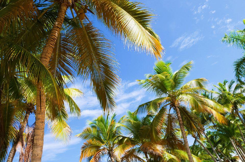 La République Dominicaine, entre Punta Cana et Saint-Domingue…