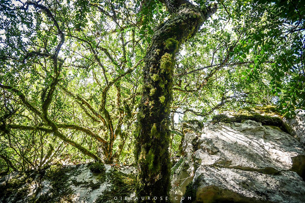 randonnée-gorges-du-verdon-foret-arbre