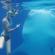 Nager avec les requins baleines aux Philippines