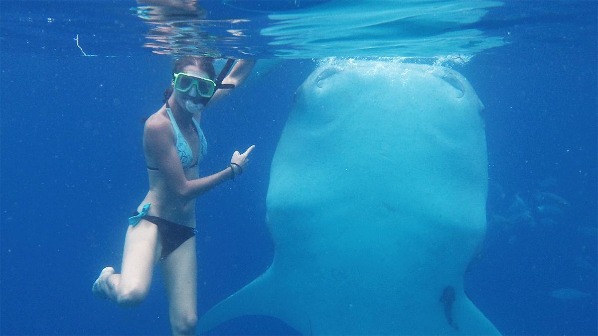 requins-baleine
