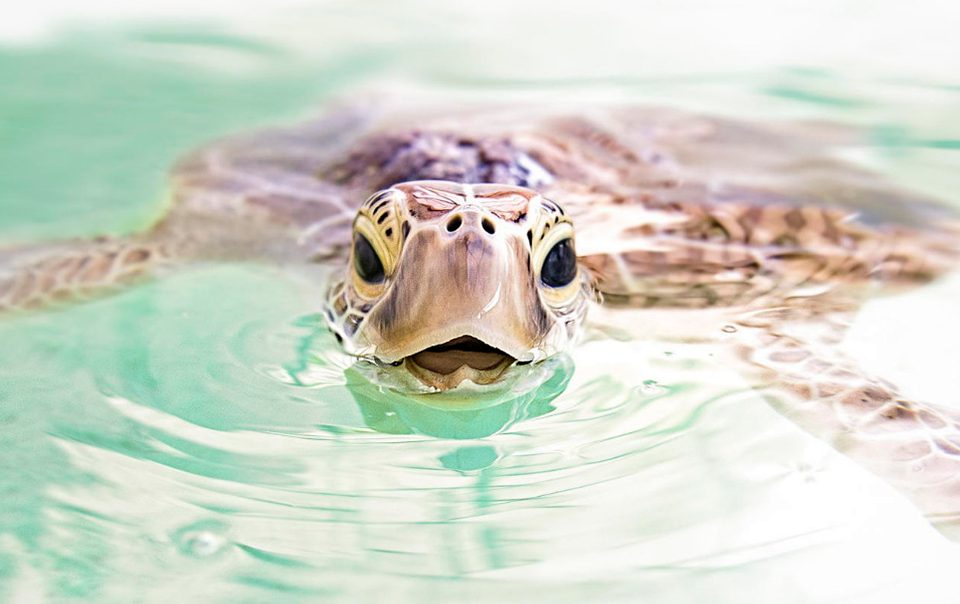 Ce photographe allemand a un talent incontestable pour photographier les tortues sous-marines