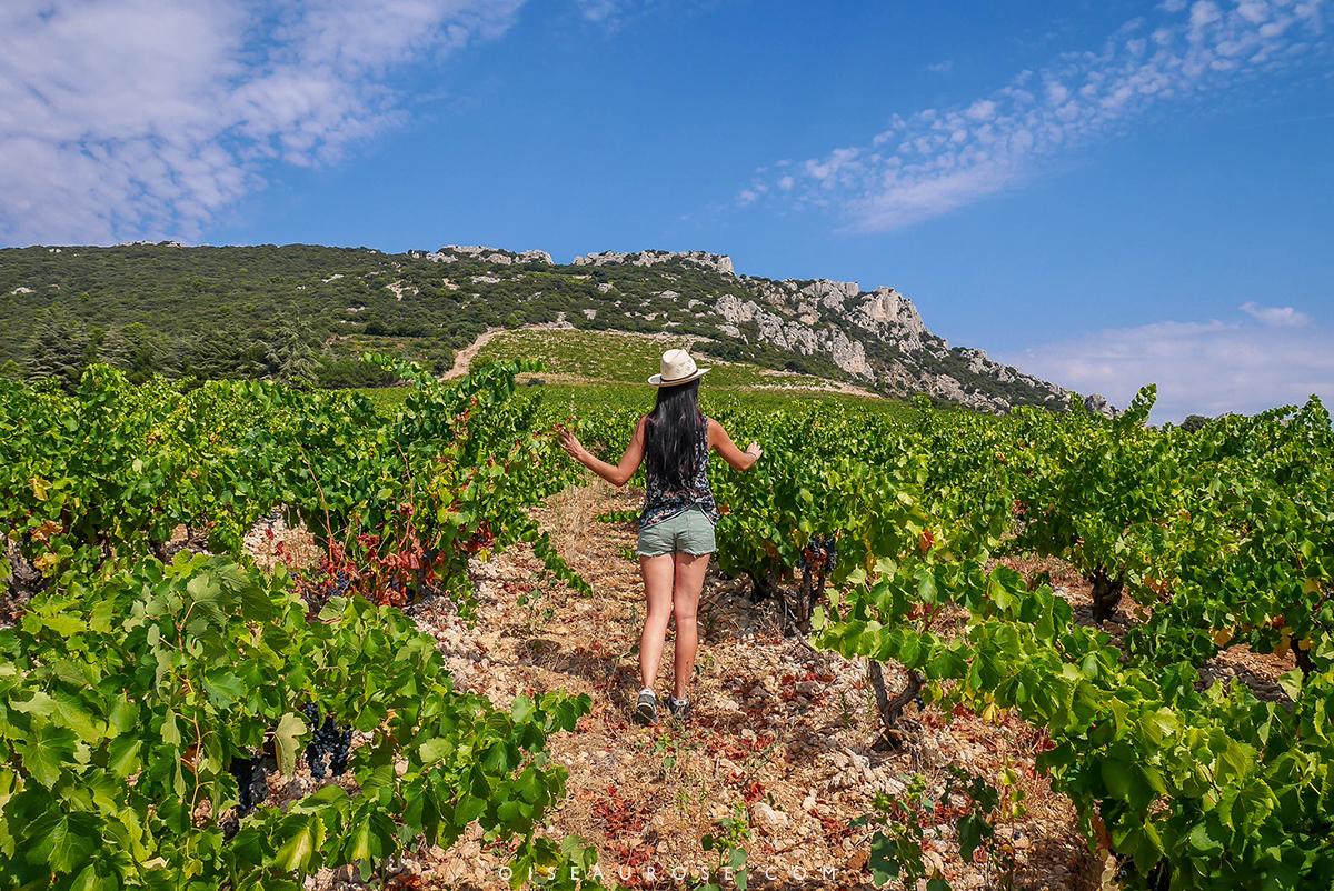 velo-provence-vigne