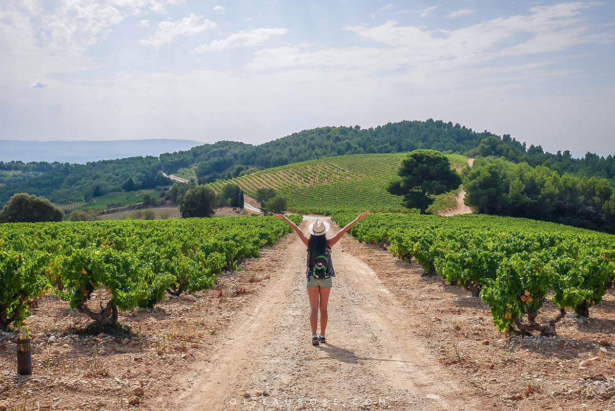 vigne-provence