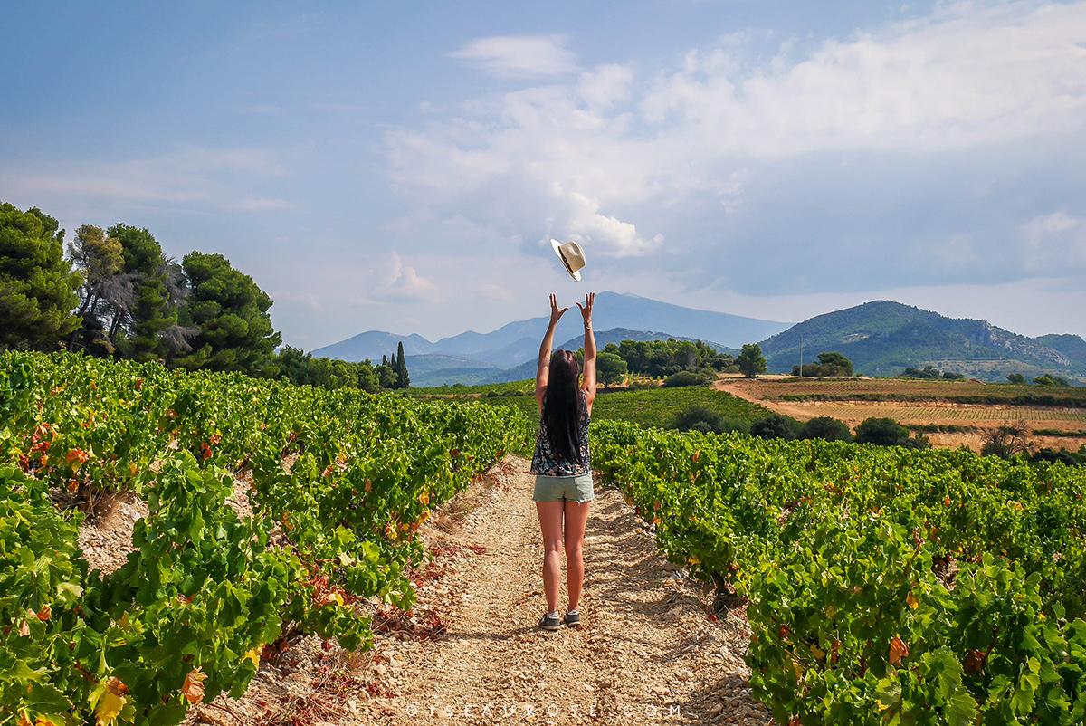 voir-vignes-velo-en-provence